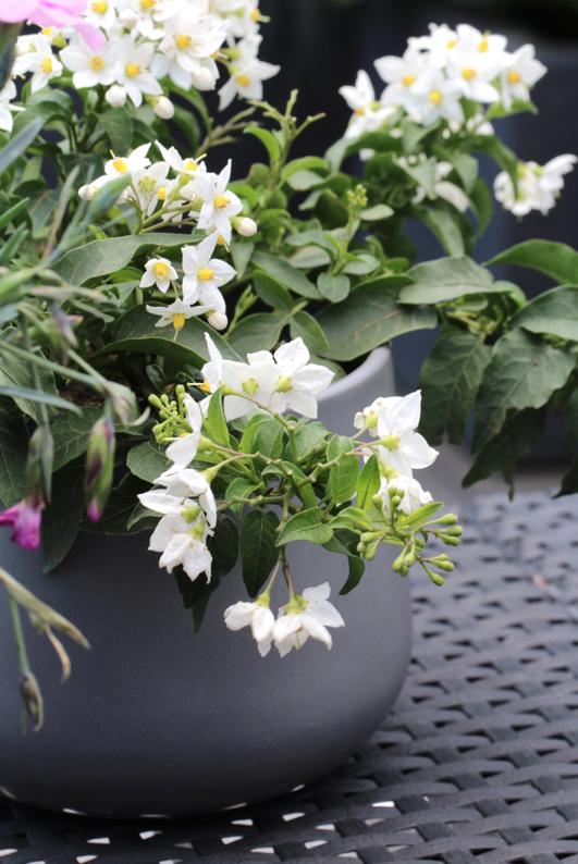 terrasse-dekorieren-günstig