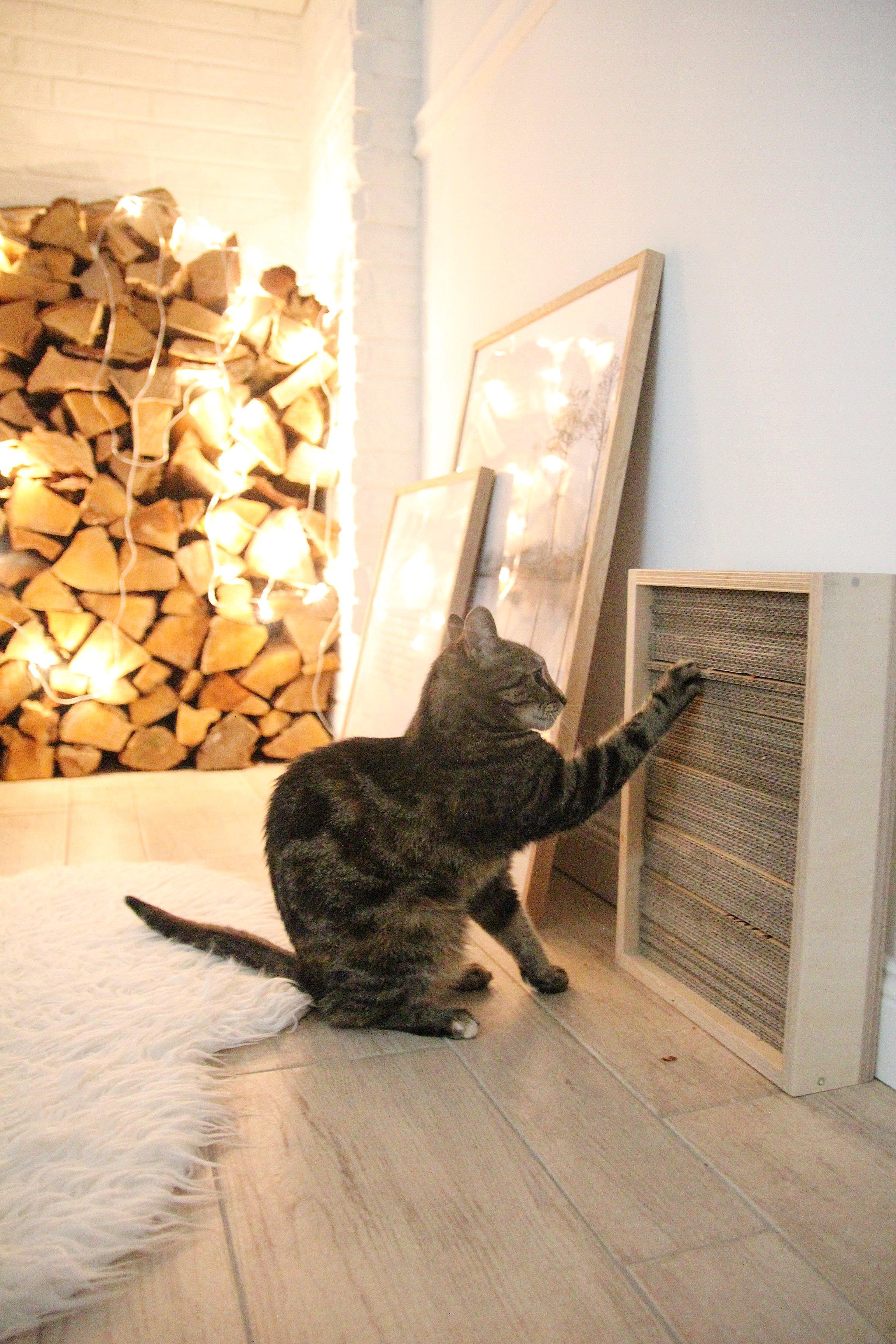 DIY Katzen Kratzbrett selber machen - DESIGN DOTS
